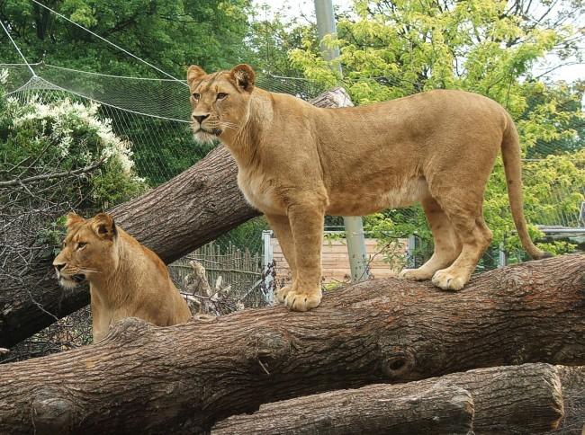 eintrittspreise zoo erfurt